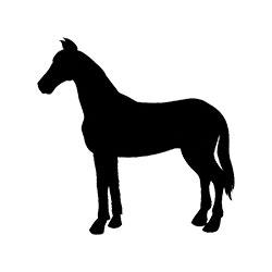 Paard | vers vlees voor hond en kat